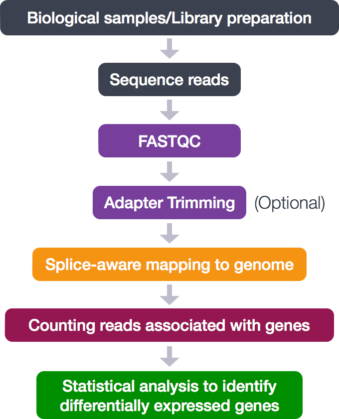 RNA-Seq workflow | Introduction to RNA-seq using HPC