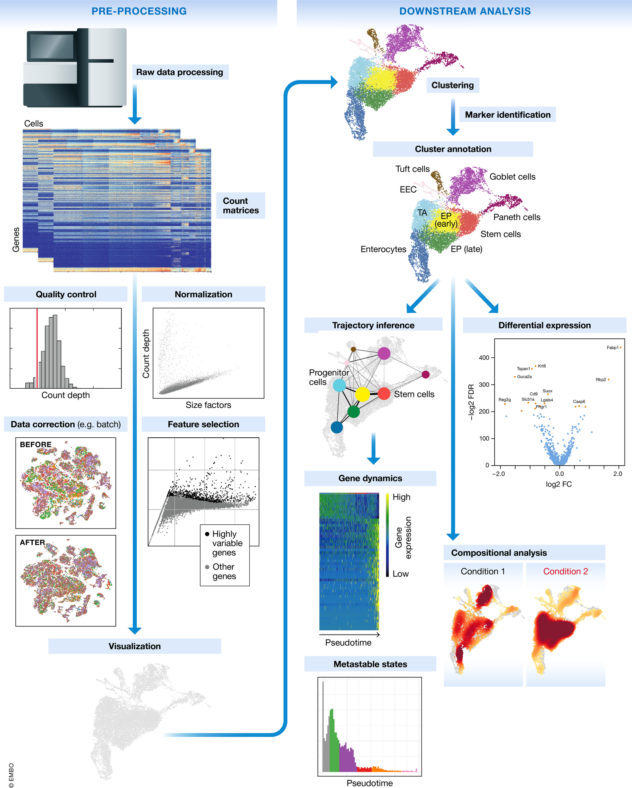 Single Cell Rna Sequencing Scrna Seq Of Cells: Introduction To Single - Cell